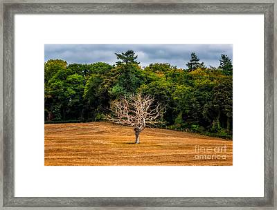 Neverending Loneliness Framed Print by Adrian Evans