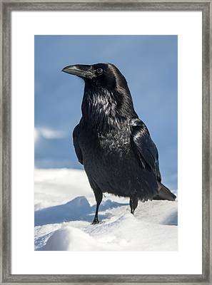 Nevermore Framed Print by Jack Bell
