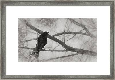 Nevermore Framed Print by Melinda Wolverson