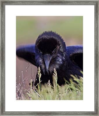 Framed Print featuring the photograph Nevermore by Todd Kreuter