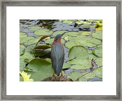Nevis Bird Observes Framed Print by Margaret Brooks