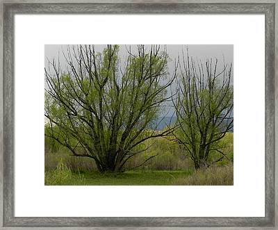 New And Green Framed Print