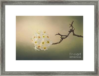 New Awakening Framed Print