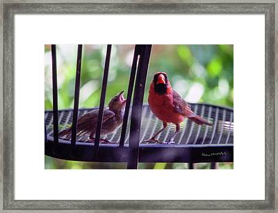 New Baby Cardinal Framed Print