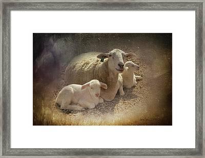 New Baby Lambs Framed Print