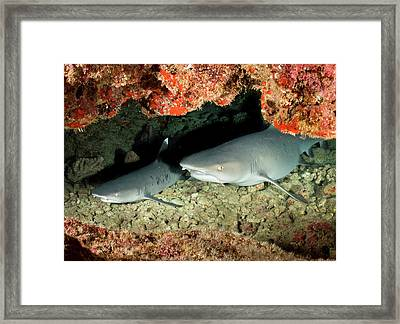 New Baby On The Way.... Framed Print