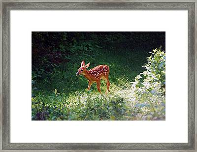 New Backyard Visitor Framed Print by Lori Tambakis