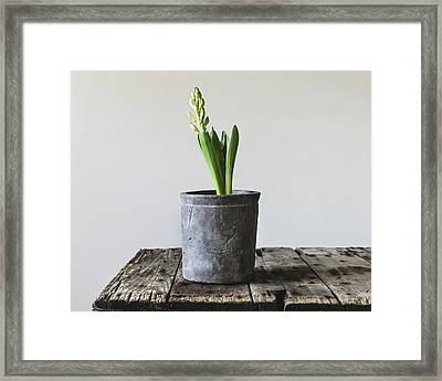 Framed Print featuring the photograph New Beginings by Kim Hojnacki