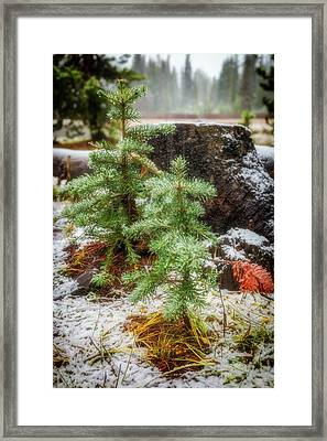 Framed Print featuring the photograph New Beginnings by Cat Connor