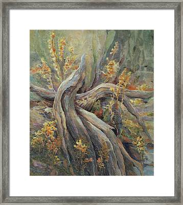 New Beginnings Framed Print by Don Trout
