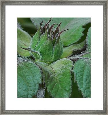New Beginnings Framed Print by Lori Mellen-Pagliaro