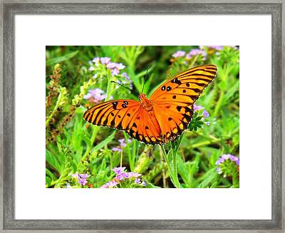 Windows From Heaven Orange Butterfly Framed Print