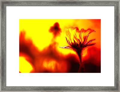 New Bloom Framed Print by Jim Dohms