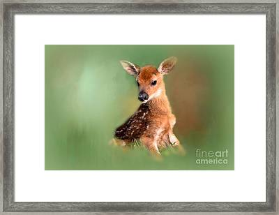 Framed Print featuring the photograph New Born Baby by Brenda Bostic
