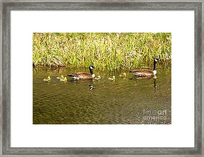 New Chicks In The Family Framed Print by Adam Jewell