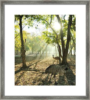 New Earth Framed Print by John Collins