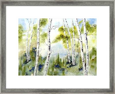 New England Birches Framed Print