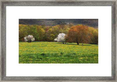 New England Color Of Spring Framed Print by Bill Wakeley