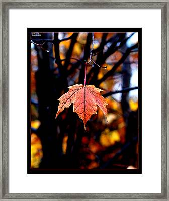 New England Fall - Lone Framed Print by William Bray