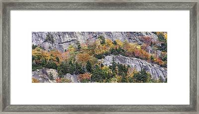 New England Foliage Burst Framed Print