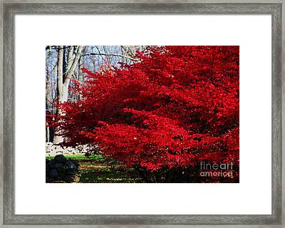 New England Glory Framed Print by Poet's Eye