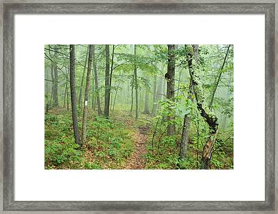 New England National Scenic Trail Misty Forest Framed Print by John Burk
