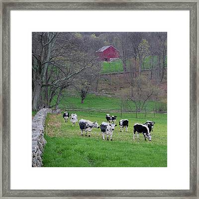 Framed Print featuring the photograph New England Spring Pasture Square by Bill Wakeley