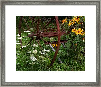 New England Summer Wild Flowers Framed Print