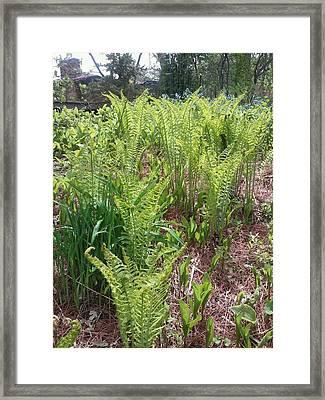 New Ferns Framed Print