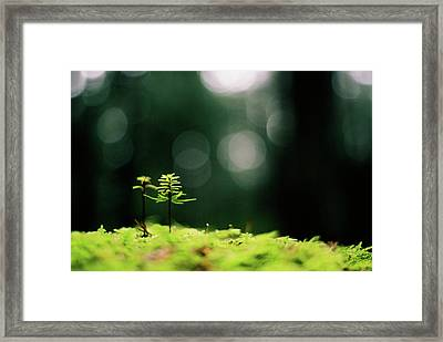 New Forest Framed Print by Cathie Douglas