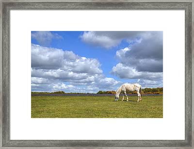 New Forest - Hampshire - Uk Framed Print by Joana Kruse