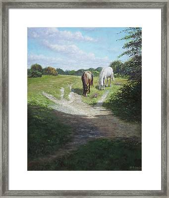 New Forest Horses With Light And Shade  Framed Print