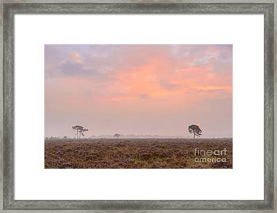 New Forest Morning Framed Print by Richard Thomas