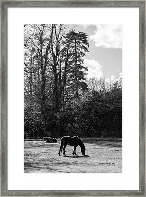 New Forest Silhouette Framed Print
