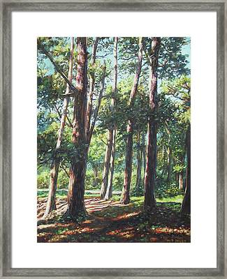 New Forest Trees With Shadows Framed Print