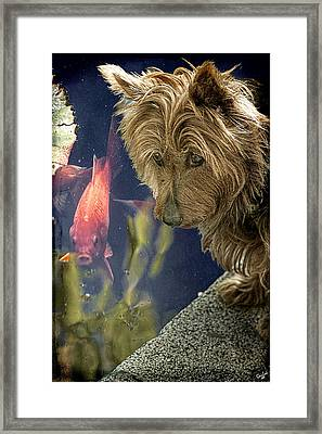 New Friends Framed Print by Chris Lord