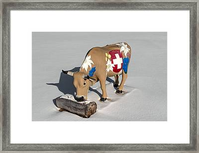 New Glarus Cow Framed Print by Todd Klassy
