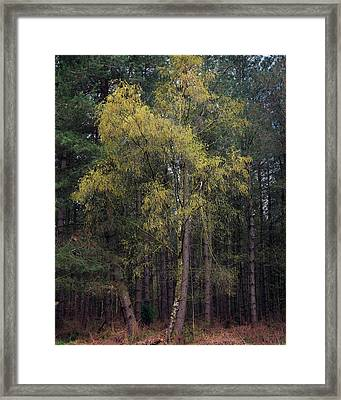 New Growth Framed Print by Chris Dale