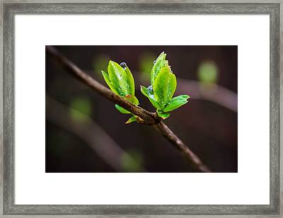 New Growth In The Rain Framed Print
