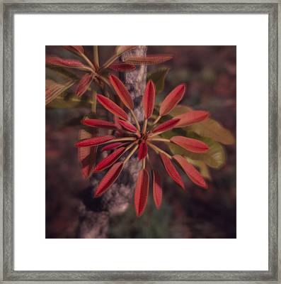 New Growth On A Shea Tree Framed Print by David Pluth