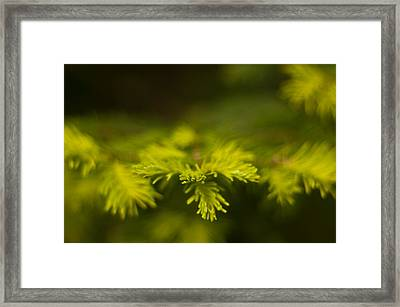 New Growth Framed Print by R J Ruppenthal