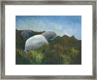 New Guinea Fowl Framed Print