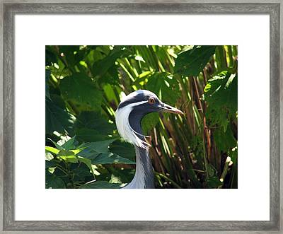 New Hairdo Framed Print by Kevin  Sherf