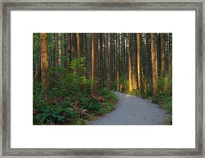 New Hiking Trail Framed Print by Michael Russell