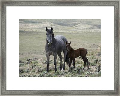 New Kids On The Block Framed Print by Nicole Markmann Nelson