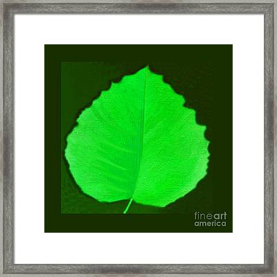 New Leaf Framed Print by Helena Tiainen