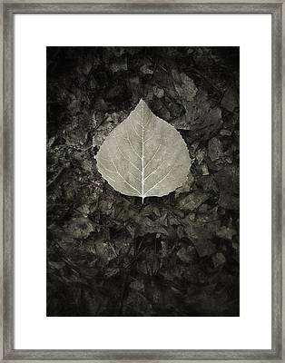 New Leaf On The Old Framed Print by Scott Norris