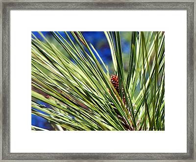 Framed Print featuring the photograph New Life by Betty Northcutt
