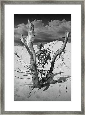 New Life Between Dead Tree Branches Framed Print by Randall Nyhof