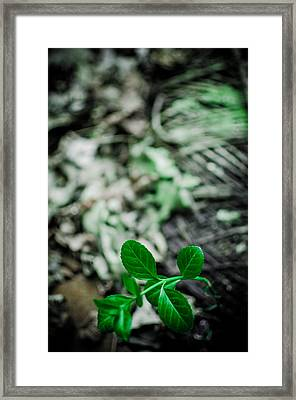 New Life From Ruins  Framed Print by Off The Beaten Path Photography - Andrew Alexander